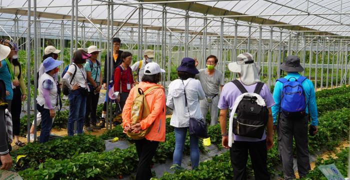 桃園大溪康莊有機休閒聚落——找到莓,草莓植株「接生」體驗活動